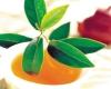Lá trà xanh chữa tiểu đường