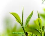 Địa chỉ bán trà Tân Cương Thái Nguyên uy tín ở Hà Nội