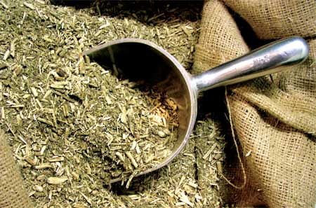 yerba-mate-tea.jpg